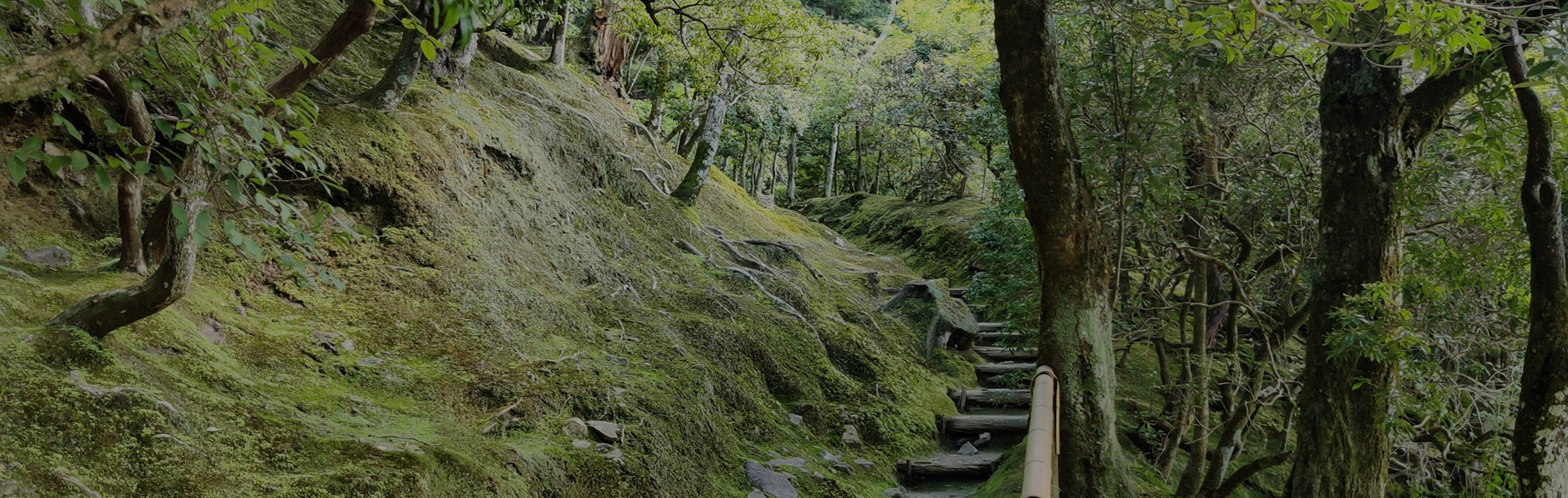 Grapheye Japan